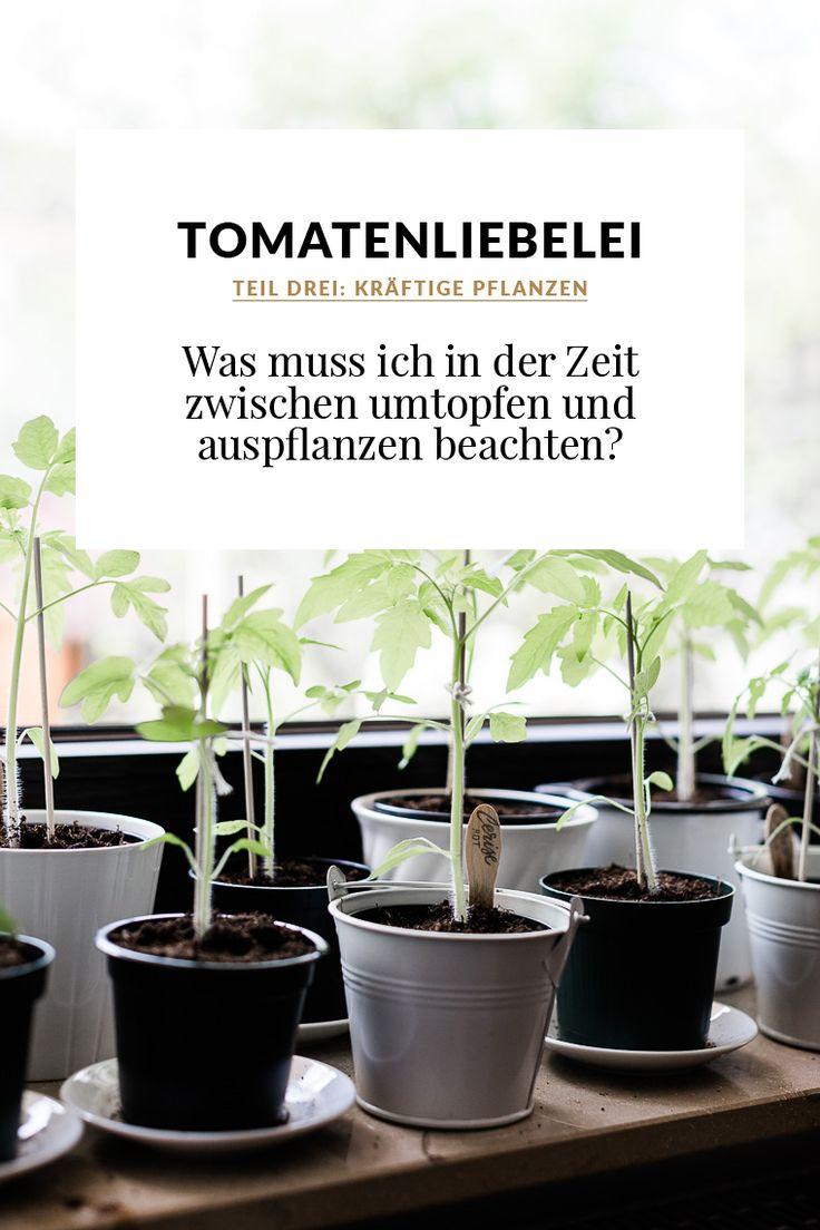 Die 174 Besten Bilder Zu Garten, Balkon & Pflanzen Auf Pinterest ... Einige Regeln Die Man Beim Umpflanzen Beachten Muss