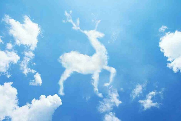 Stag cloud from Google