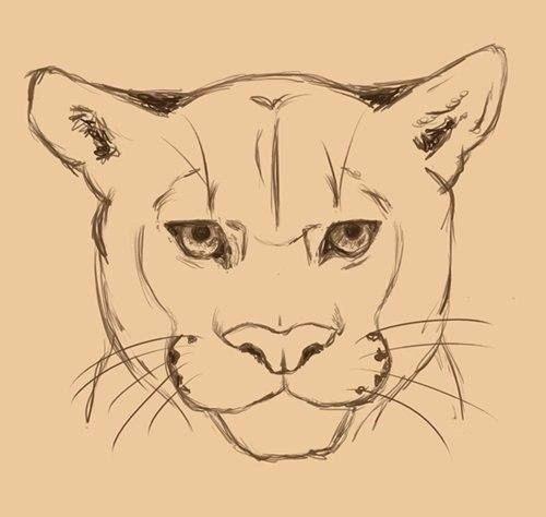 Puma zeichnen - Anleitung-dekoking-com