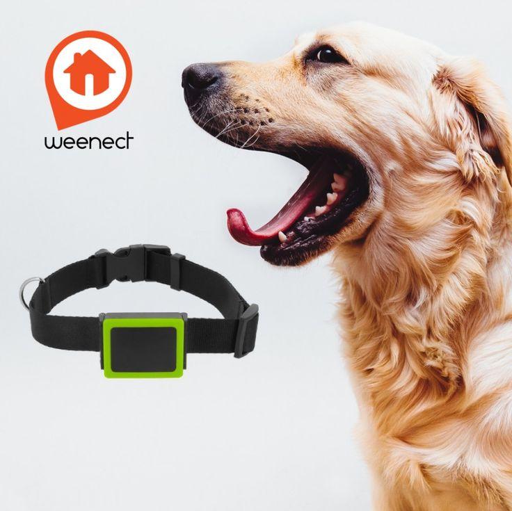 Sledujte hafana kdekoľvek ste | GPS obojok pre psa Weenect Pets