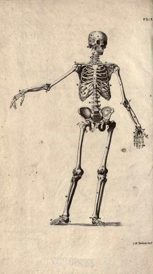 47 best skeletons are not scary images on pinterest skulls cheseldens plates of the human bones fandeluxe Image collections