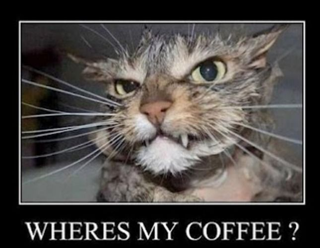 Good Morning Tuesday Cartoons   somebody give this cat some coffee quick! :)