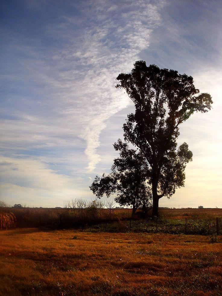 """- """"Ese"""" árbol...-  Buenos Aires, Argentina. © Gonzalo Kenny"""