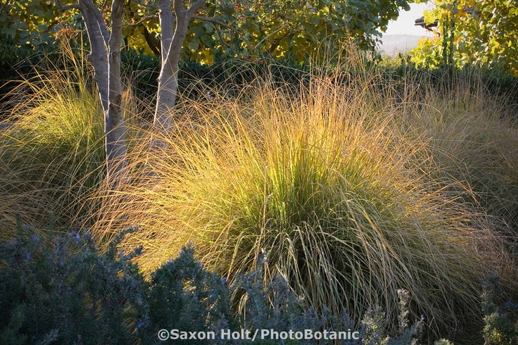 172 best grasess in the garden images on pinterest for Border grasses for landscaping