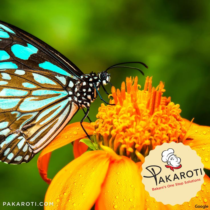 """""""Happiness is a butterfly, which when pursued, is always beyond your grasp, but which, if you will sit down quietly, may alight upon you."""" -Nathaniel Hawthorne- #MotivasiPakaroti"""