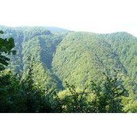 ROMSILVA a plătit un milion de dolari ca să NU știm câte păduri are România