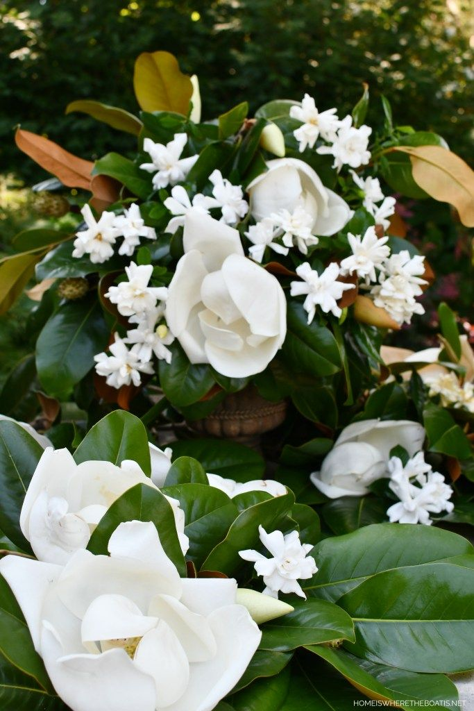 A Scent Sational Duo Magnolia And Gardenia In 2020 Mosaic Flower Pots Flower Pots Gardenia