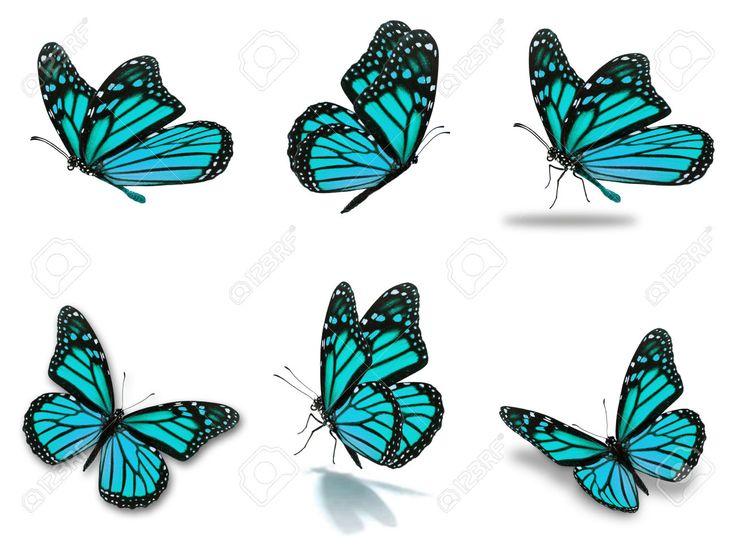 Resultado de imagen para fotos mariposas monarcas