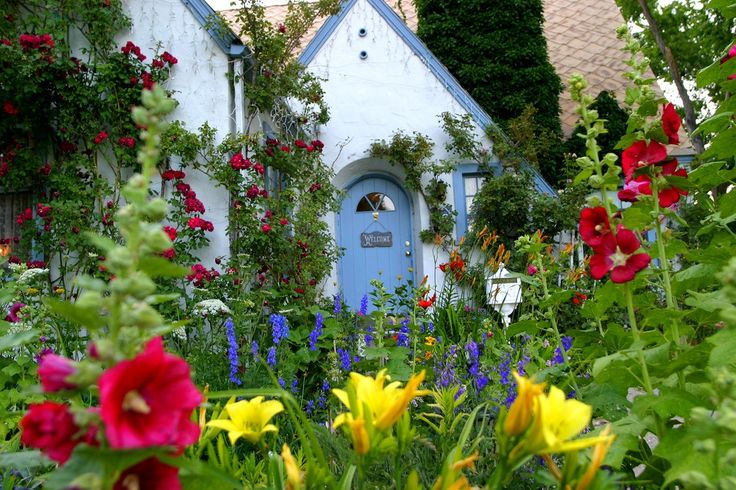 Beautiful Cottage Garden | Hollyhocks, Lilies, Delphiniums, Roses