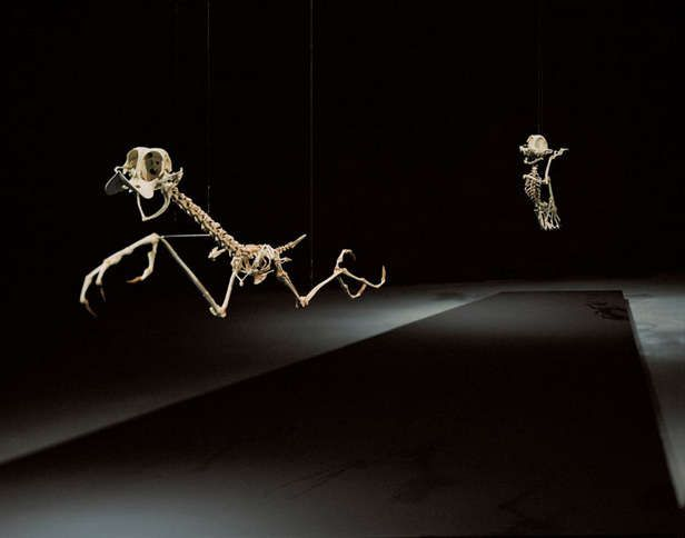 Fossilized Childhood TV Personalities : Cartoon Character Skeletons