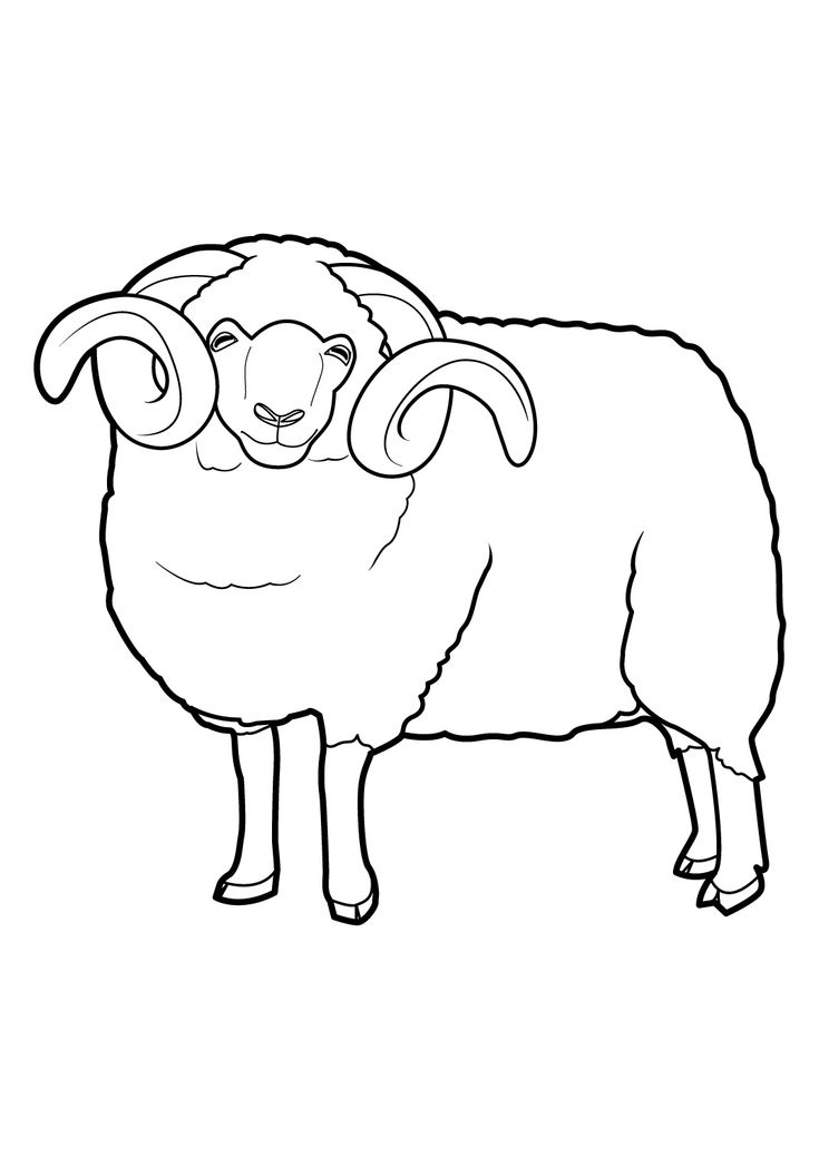 Coloriage mouton a imprimer 16 moutons pinterest animaux - Mouton en dessin ...