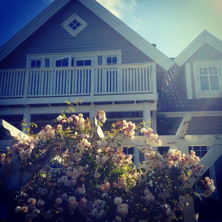 My garden - climbing roses - greige house