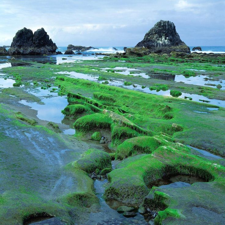 Singles in seal rock oregon go out for a trip., beauty scenery, Pinterest, Scenery, Nature and Beauty