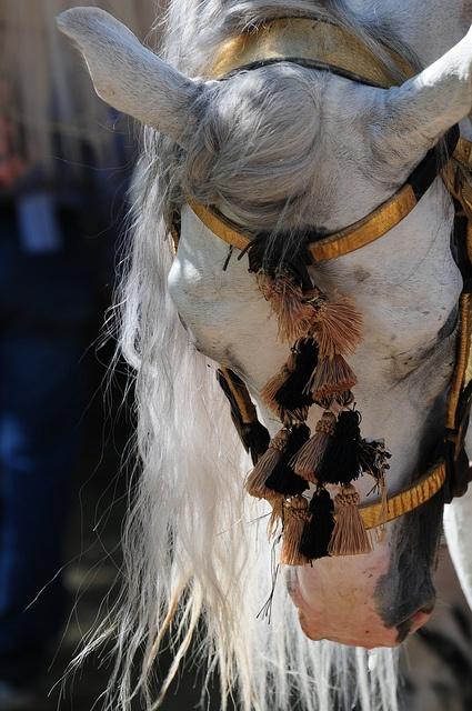 Azteca horse Pura Raza Espanola Yeguada Herrera Caballos Espanoles Caballos Bailadores Andalusian Lusitano Lippizzaner spanish horse Piccador Vaquero Charro