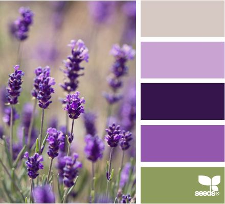 field huesBathroom Colors, Design Seeds, Lavender Fields, Fields Hues, Bedrooms Palettes, Colors Theme, Colors Palettes Quilt, Wedding Colors, Colors Schemes