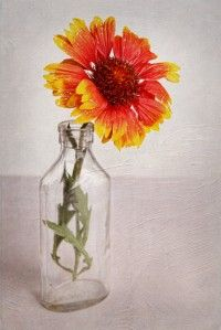 Buďte vděční, ale chtějte víc…   Pavla Heřmanovská
