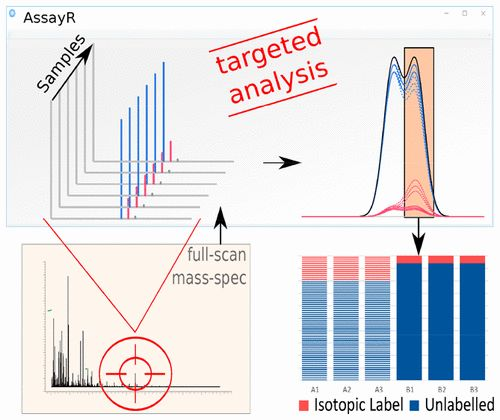 AssayR: A Simple Mass Spectrometry Software Tool for Targeted Metabolic and Stable Isotope Tracer Analyses