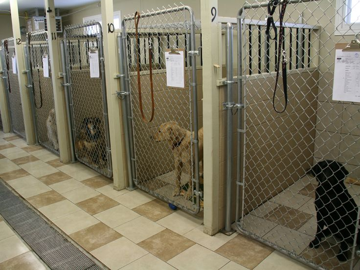 17 Best Images About Dog Kennel On Pinterest