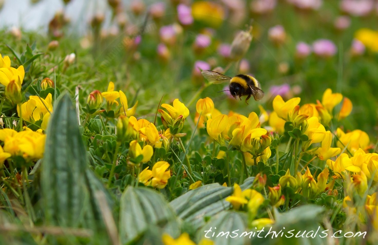 Bumble Bee - by Tim Smith Visuals   Absolutely LOVE this picture