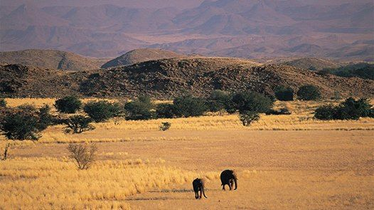"""When you arrive at Mowani Mountain Camp your dreams might ask you to stay.""  Luxury Safari Lodge in Namibia"