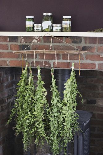 The Medicine of Making – The Last Wild Mint - Herb Mother