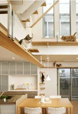 The Cats House in Japan integrates myriad ladders, walkways and cubbies into the decor for its feline inhabitants