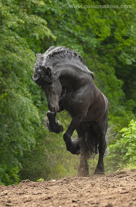 Gosia Mąkosa Equine Art & Photography: Daan