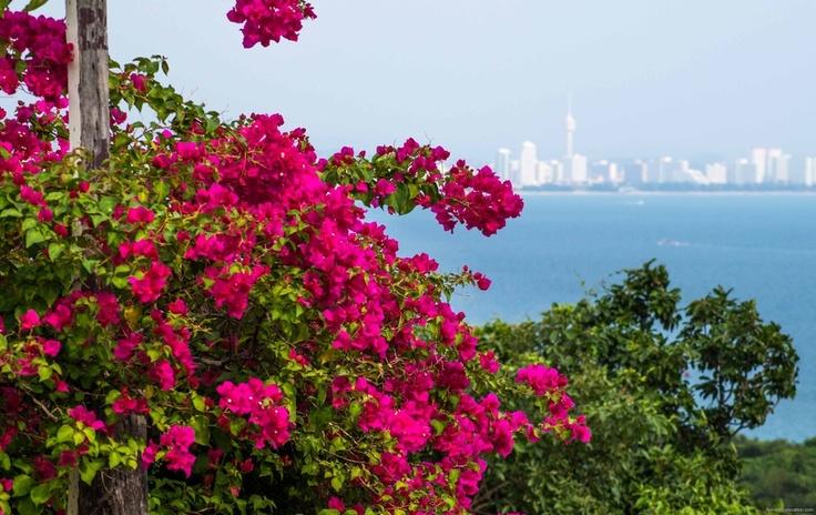 Ko Larnm pattaya view