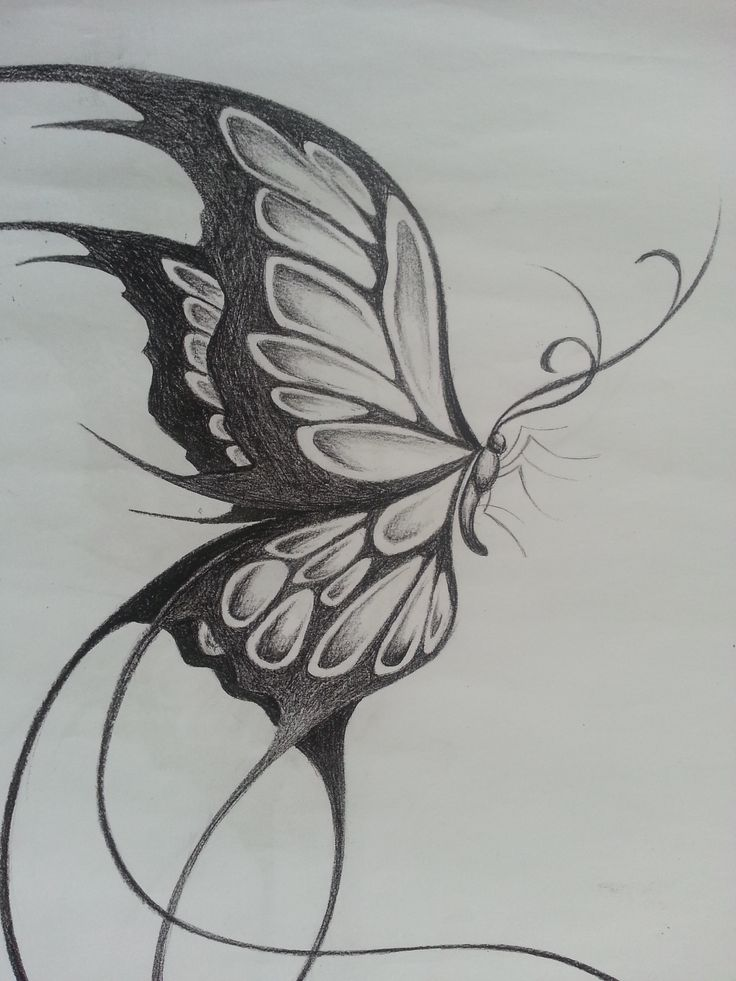 Beautiful Pencil Sketches Of Butterfly