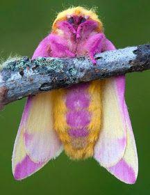 A anêmona-bolha ( 'Entacmaea quadricolor')      A Aranha Caranguejeira Ravine ('Cyclocosmia truncata')      Caracóis sobre cogumelos......