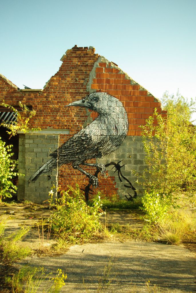 50 Animals in Street Art Graffiti by ROA, Belgian (12)