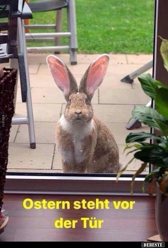 Ostern steht vor der Tür… | Lustige Bilder, Sprüche, Witze, echt lustig – Hedi Raffel