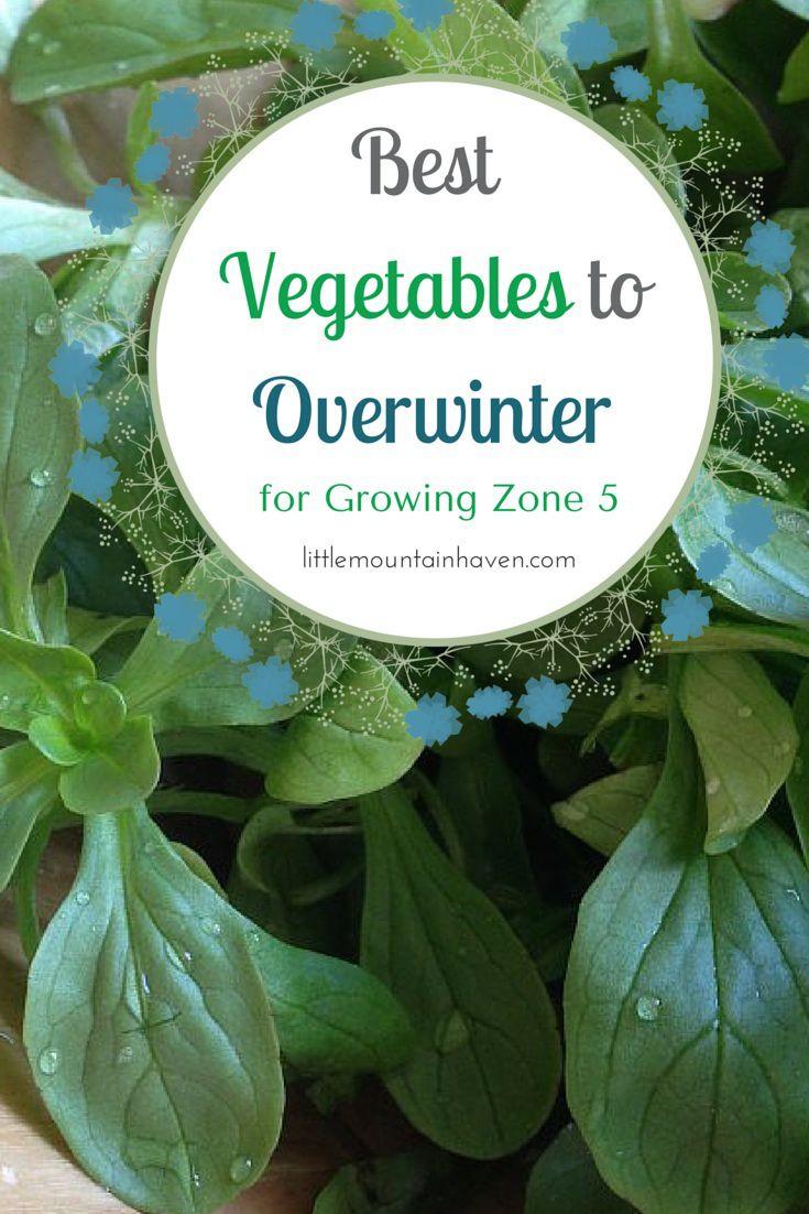 Best Vegetables To Overwinter In Growing Zone 5 400 x 300