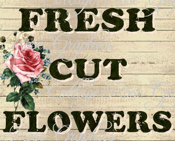 74 best Ginseng images on Pinterest Herbal medicine, Growing - fresh blueprint 3 free download