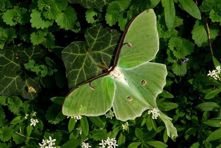 Beautiful Green Leaf . . . . . .  by anildudhat2014