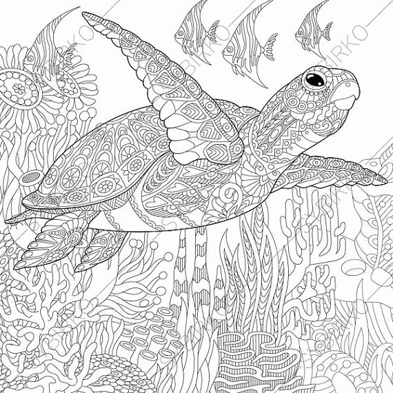 ausmalbilder mandala schildkröte  best style news and
