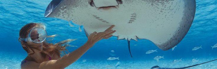 Дайвинг - сказочный подводный мир