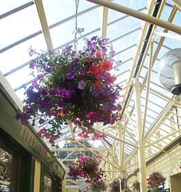 Ivybridge - Hanging Baskets in Glanvilles Mill Shopping Center, Ivybridge © Esin Forster