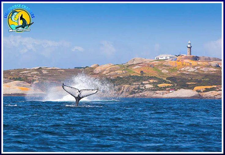 Montague Island Tour - Lighthouse Charters Narooma and Montague Island Discovery Tours