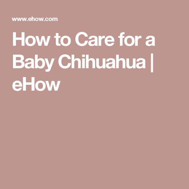 How to Care for a Baby Chihuahua | eHow