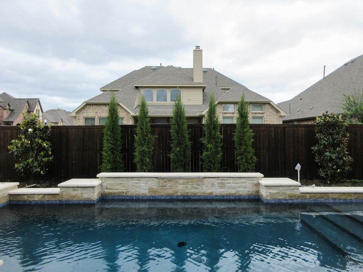 Eastern Red Cedar 'Taylor' Backyard pool landscaping