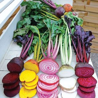 rainbow beets seed kit contains Subeto, Boldor, Chioggia, Albina Vereduna, and Bull's Blood Scarletta