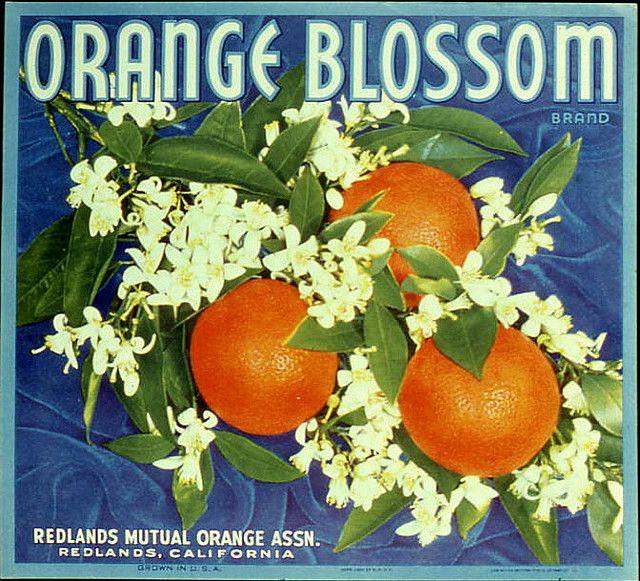 Orange Blossom Citrus Fruits. #crateart