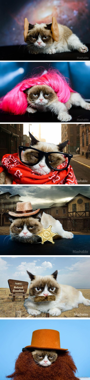Grumpy Cat plays dress up  ╔═╦╗╔╦╗╔═╦═╦╦╦╦╗╔═╗  ║╚╣║║║╚╣╚╣╔╣╔╣║╚╣═╣  ╠╗║╚╝║║╠╗║╚╣║║║║║═╣  ╚═╩══╩═╩═╩═╩╝╚╩═╩═╝