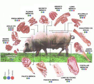 Partes del Cerdo Iberico (parts of the Iberian pig)