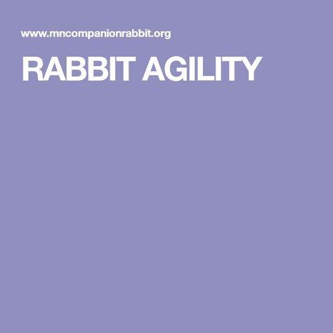 RABBIT AGILITY