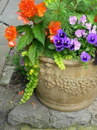 A large concrete pot near the steps completes the scene. - I see begonias, yellow creeping jenny, Purple pansies, violet violas, and perhaps that ferny thing is a yellow marigold.