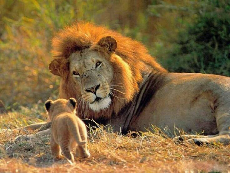 Pin by Alleles Ravenclaw on Wonderful Animals Big cats