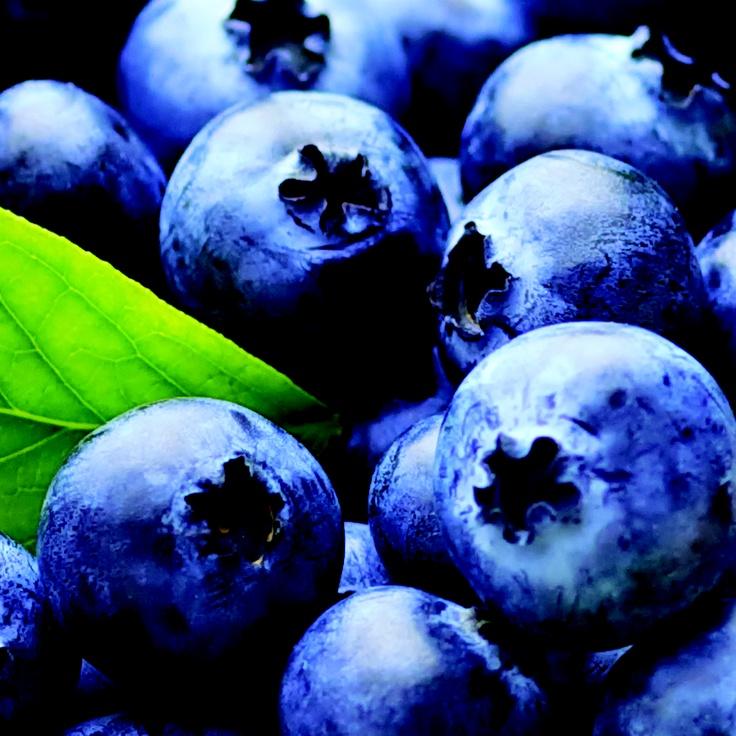Blueberry / Bleuet Fruits  Passion