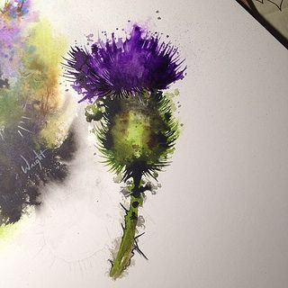 Watercolor thistle tattoo art Scottish thistle. reminds me of my trip there and represents my Scottish background